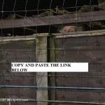 over te fence (Custom)